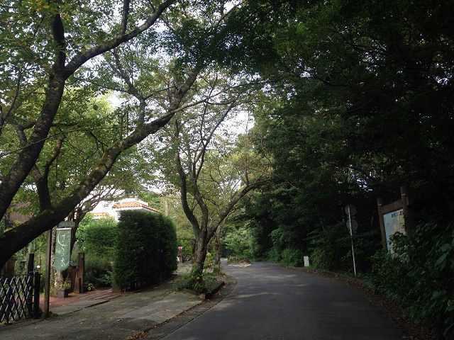 さらの森1.jpg
