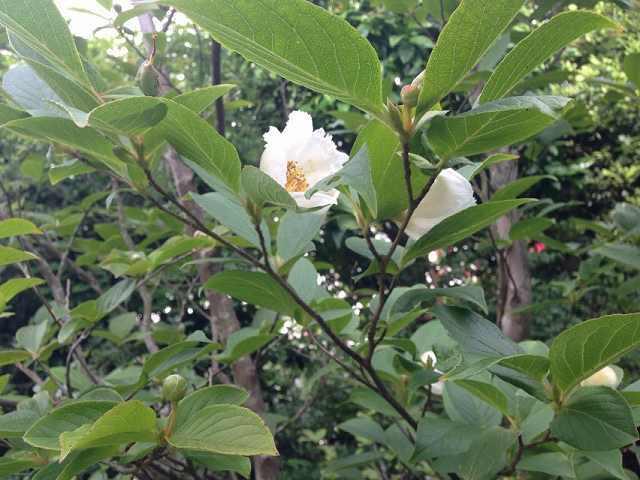 さらの花2.jpg