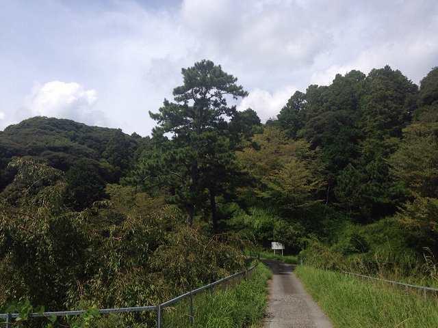 そこからの登城口3.jpg