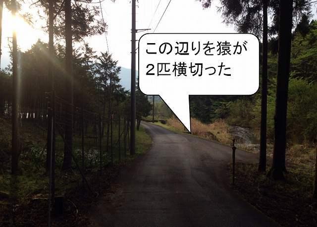 エテ公目撃.jpg