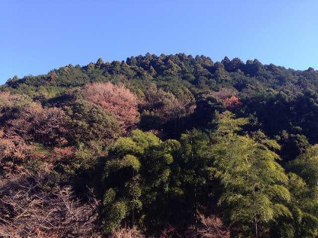前の山.jpg
