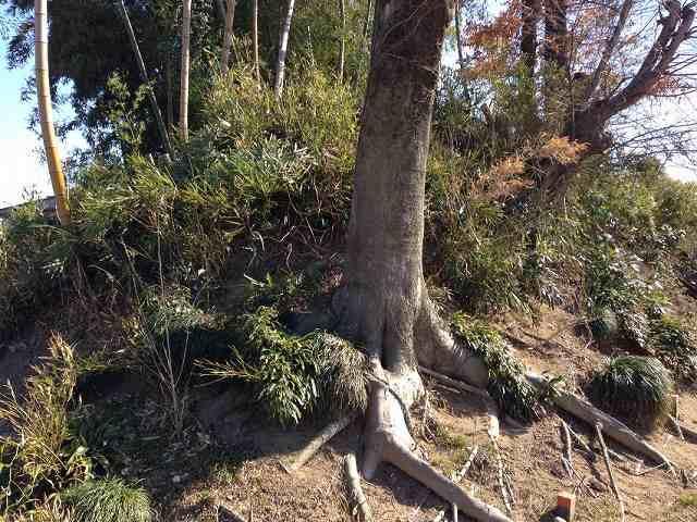 土塁に木の根っこ.jpg