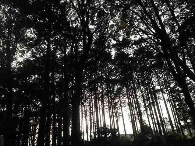境内の森.jpg