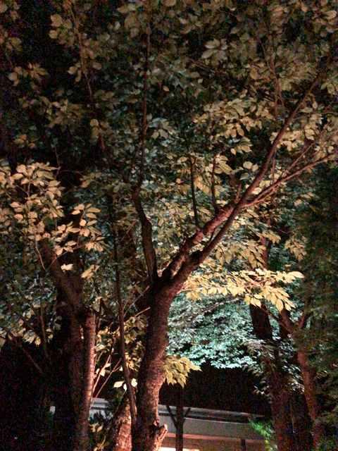 夜13.jpg