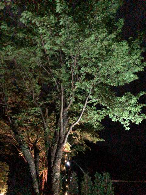 夜14.jpg