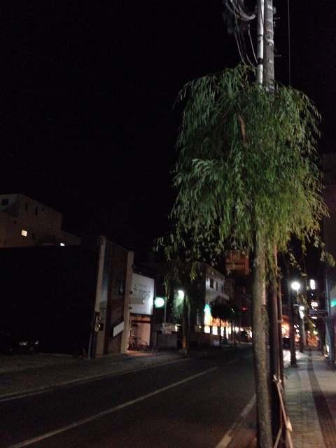 夜の柳通り1.jpg