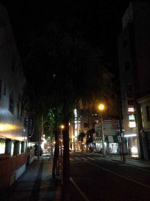 夜の柳通り2.jpg