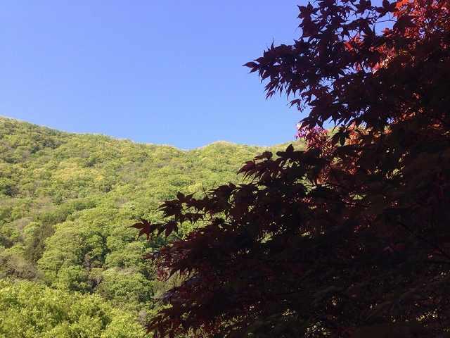 山2.jpg