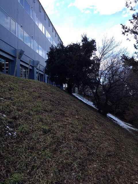 役所裏の切崖1.jpg