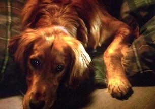 愛犬1.jpg