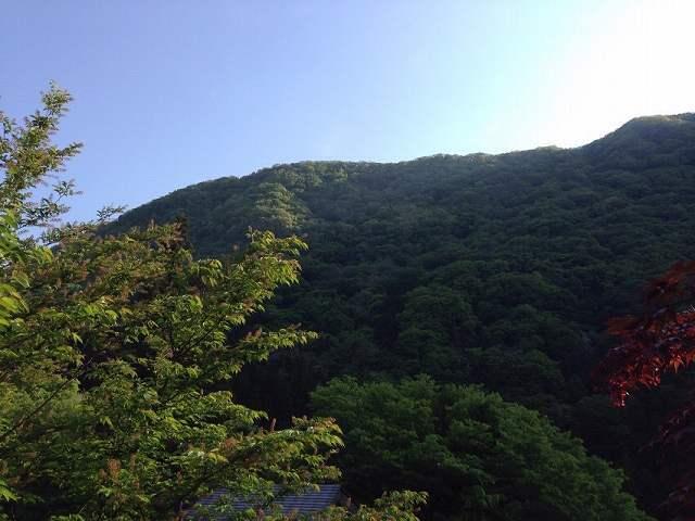 朝の山1.jpg