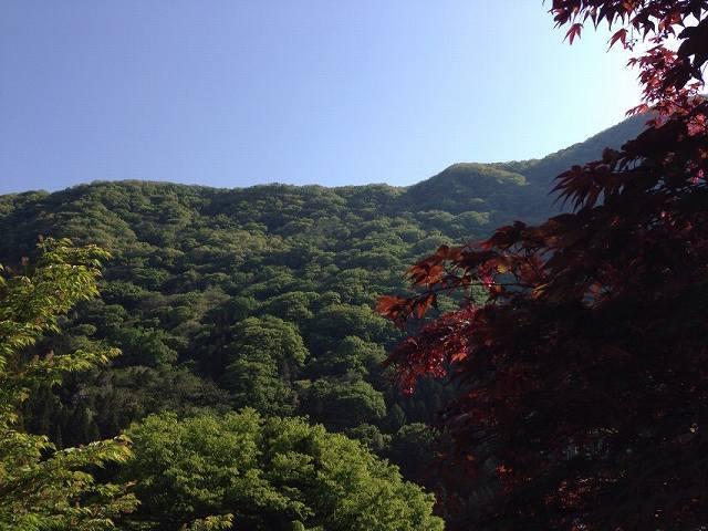 朝の山4.jpg