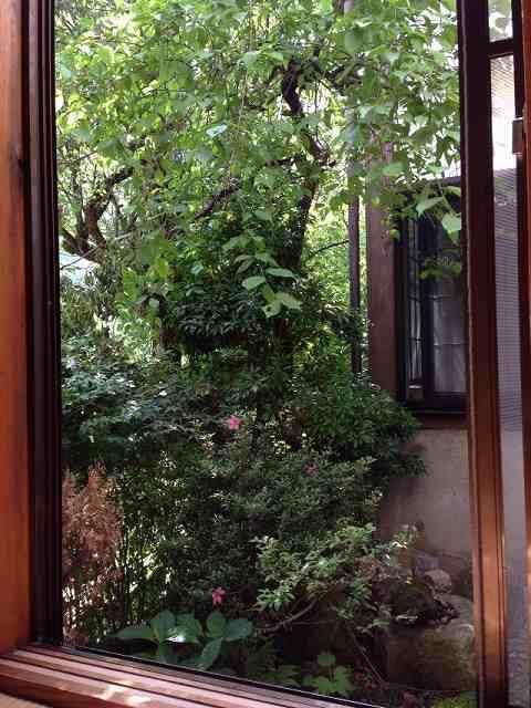 朝の箱庭1.jpg