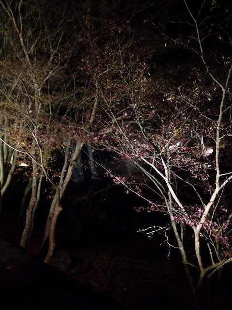 木々が囁く.jpg