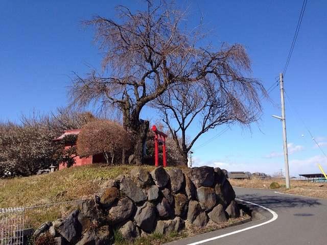 桃井城12.jpg