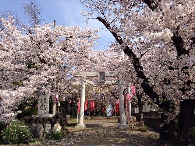 桜の本庄城2.jpg