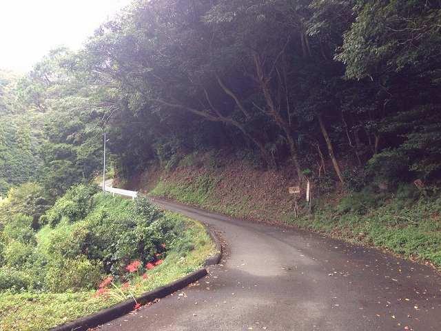 途中の道.jpg