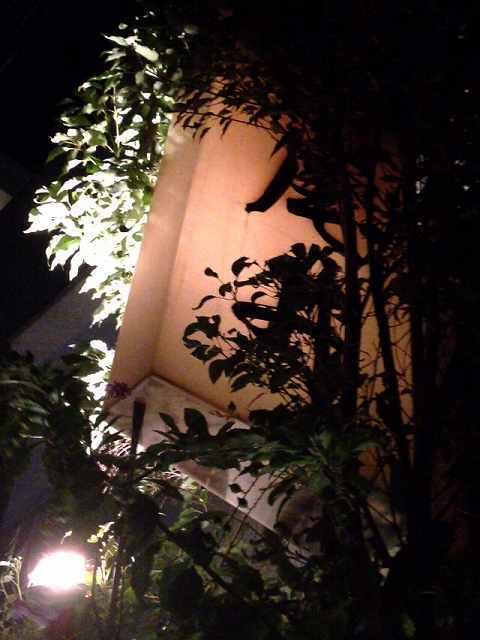 闇に光る4.jpg