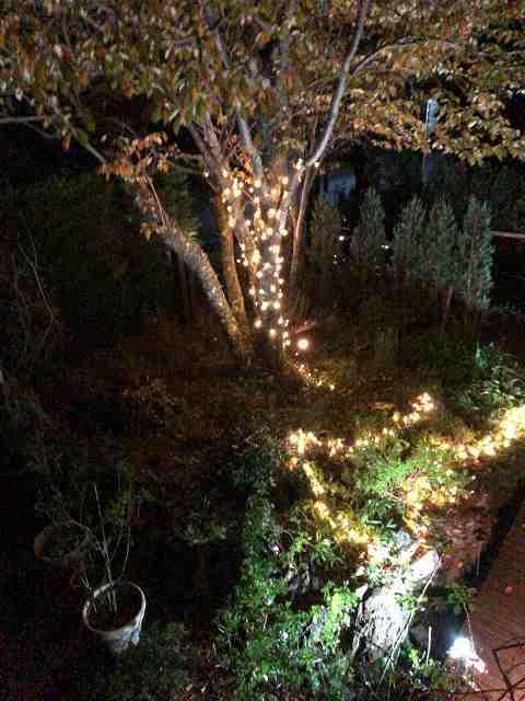 イルミ17ツリー6.jpg