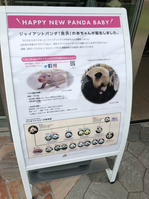 パンダの赤ちゃん1.jpg