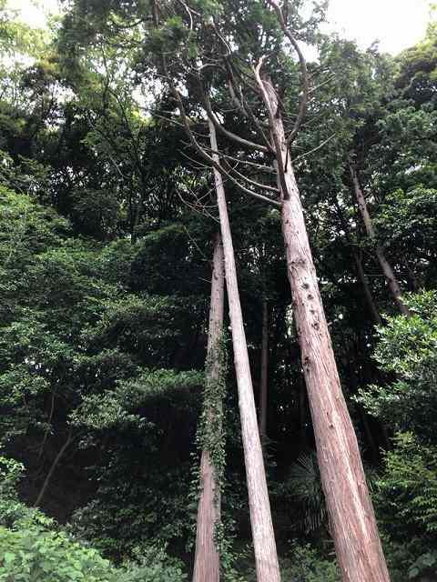 境内の森1.jpg