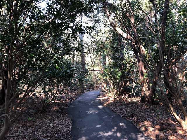 大瀬崎7大瀬神社境内の森.jpg