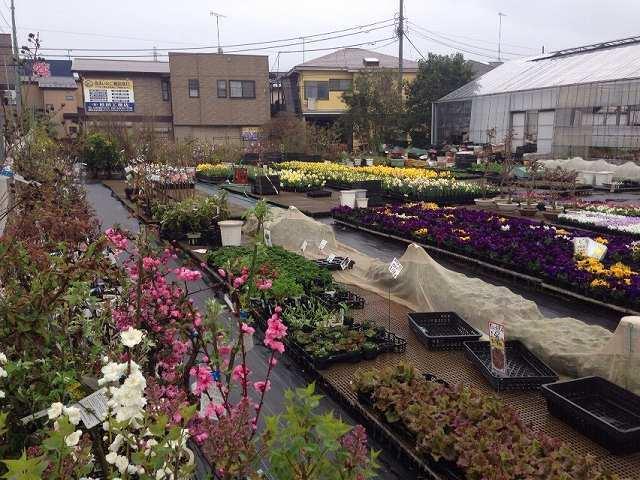 小雨降る菜園.jpg