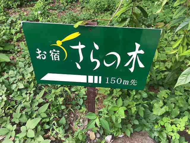 散歩4.jpg