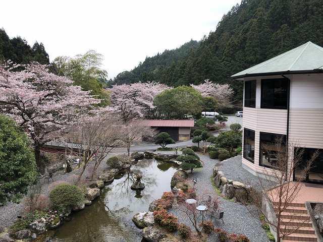朝の庭1.jpg