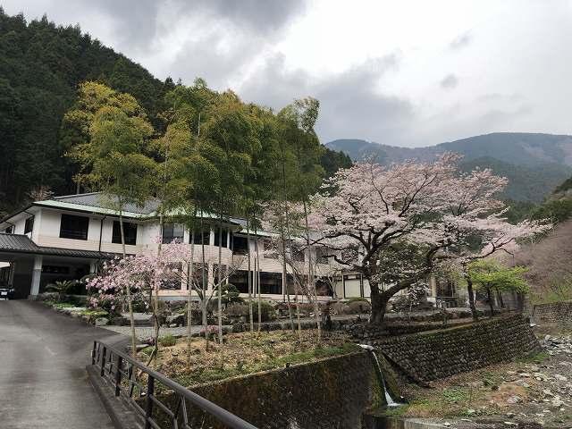 朝の桜5.jpg