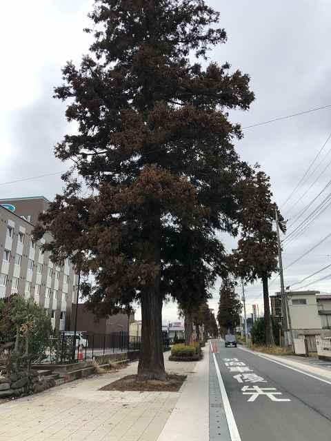 杉並木1.jpg