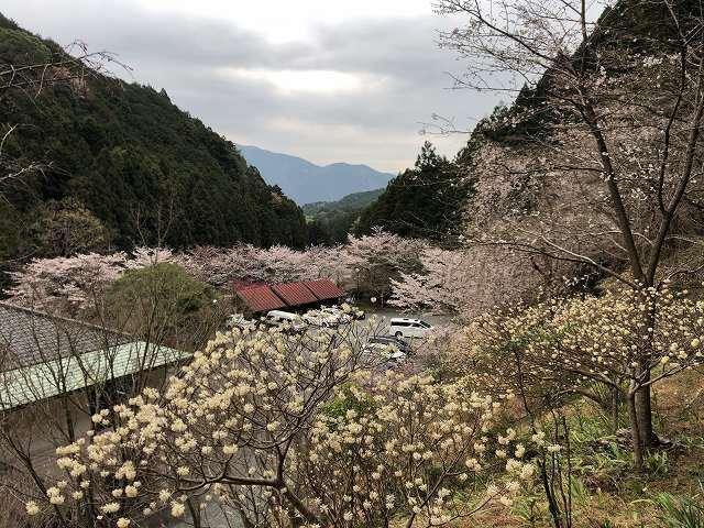 桜13.jpg