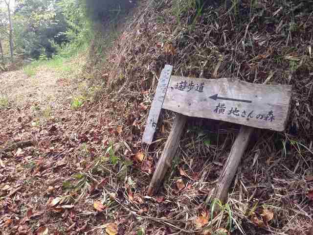 横地さんの森.jpg