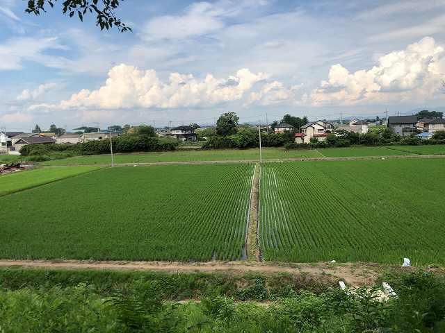 水田を見下ろす.jpg