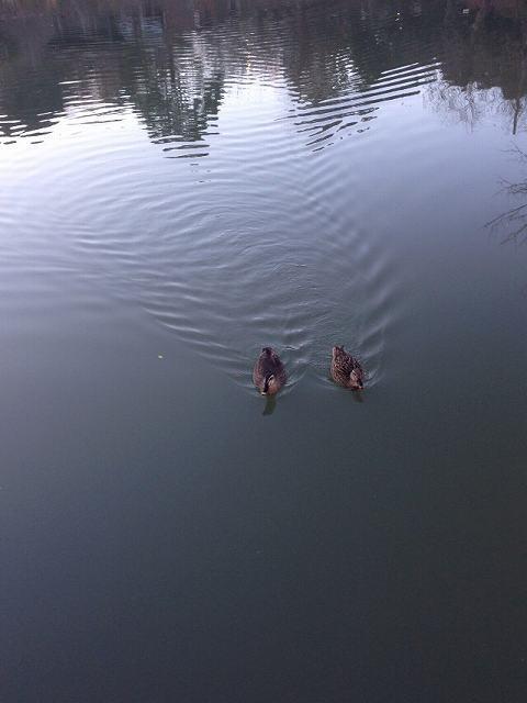池13.jpg