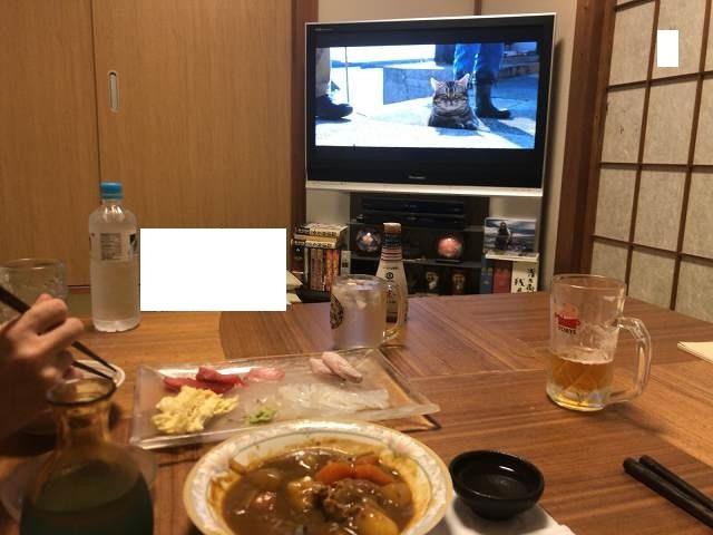 画面に映る猫.jpg