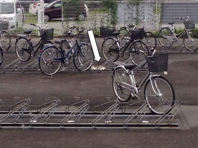 自転車枠で寛ぐ.jpg