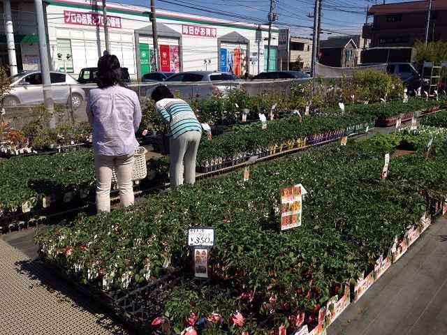 菜園4~もう1か所.jpg