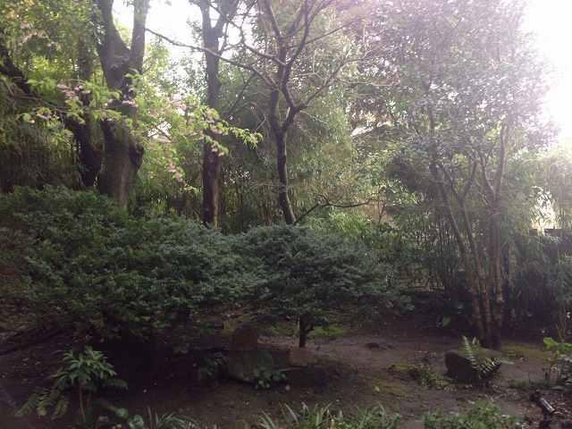 裏山2.jpg