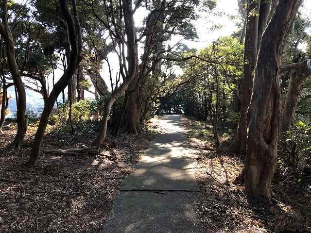 路の右は神池で左は海.jpg